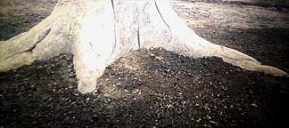 A dying tree symbolizes the death of nature, but the flower represents hope?